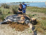 Leatherback sea turtle washed up in Huelva