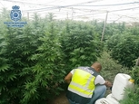 El Ejido marijuana plantation in Almeria tripped up by water theft